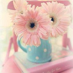 Pastel Pink and Blue Pretty Pastel, Pink Flowers, Beautiful Flowers, Gerbera Daisies, Pink Gerbera, Ballet Beautiful, Flower Wallpaper, Iphone Wallpaper, Funny Wallpapers