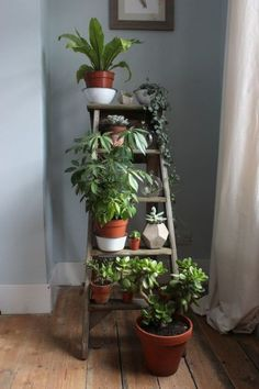 The new darling - a pretty, old ladder! - Flure -You can find Old ladder and more on our website.The new darling - a pretty, old ladder! Plantas Indoor, Decoration Plante, Green Decoration, Large Plants, Green Plants, Green Cactus, Shade Plants, Cactus Plants, Cactus Flower