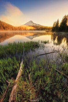 Hood Gold Dust by Eamon Gallagher on 500px  )