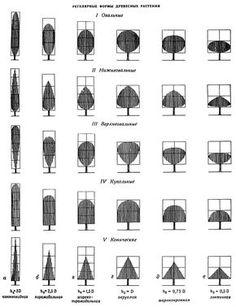 Формы деревьев в ландшафтном дизайне
