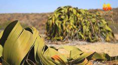 Deserto do Namibe 2 Africa
