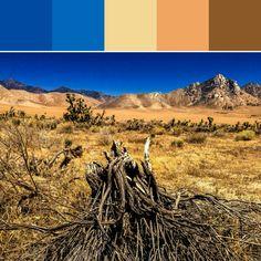 《California Desert Palette》
