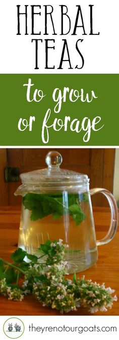 Learn how to grow or forage for these delicious herbal teas! Learn how to grow or forage for these delicious herbal teas! Homemade Tea, Homemade Things, Healthy Herbs, Healthy Moms, Brewing Tea, Tea Blends, Growing Herbs, Herbal Teas, Tea Recipes