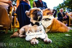 Tips for including dogs in your wedding | Phoenix Bride and Groom magazine #Arizona #wedding #dogs Azwedding #arizonaweddings #dogsatweddings #weddingplanning #advice #tips Ben + Kelly Photography @btsevents @thephoenician