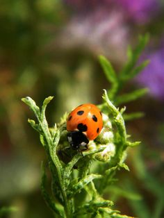 Perfection in miniature :Ladybird #makesmehappy  @White Stuff UK