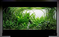 Low Light Planted Aquarium - Yahoo Image Search Results