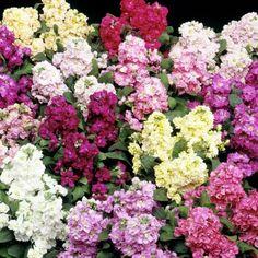 Top 10 Wonderful Flowers That Bloom All Year Long #flowergardens