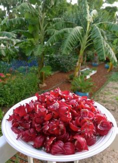 Jerry Colbly-Williams on Rosellas: (Hibiscus sabdariffa) make 'Sudan tea' and rosella jam. The seed and seed pod are an acquired taste. Hibiscus Recipe, Winter Crops, Acquired Taste, Veggie Patch, Garden Yard Ideas, Jelly Recipes, Seed Pods, Vegetable Salad, Edible Flowers
