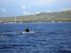 Lahaina behind a whale from Jon's Maui Info www.mauihawaii.org