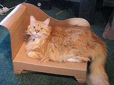 DIY cat bed. gotta make this for my cat that refuses to sleep on anything that isn't a cardboard box