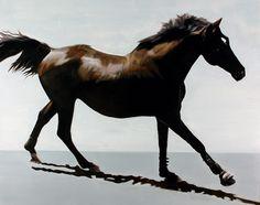 "Jan Lukens, 'Stride', Oil on canvas, 48x60"", 2013. Price on request"