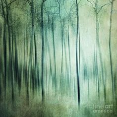 Woods Photograph - There Is Light Somewhere by Priska Wettstein