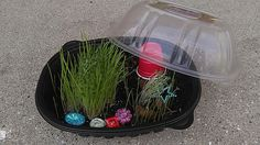 """Daisy Scout Earth Day craft, fairy garden in a takeout chicken container. Use chia and grass seed, plus decorations. The girls learned about the water cycle, the """"greenhouse effect"""" (don't leave it in the sun because heat cannot escape), and how plants give us oxygen and soak up carbon dioxide. Also using resources wisely by recycling the plastic container. They loved the activity!"""