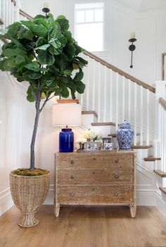 Cozy Coastal Beach House - beach style - staircase - orange county - by Bliss Home & Design Pottery Barn, Feng Shui, Bliss Home And Design, Fiddle Leaf Fig Tree, Displays, Coastal Living Rooms, Interior Plants, Design Interior, Teen Girl Bedrooms