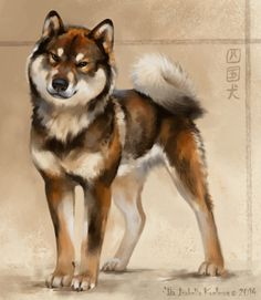 The Shikoku, our dream dog!