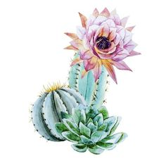 Cactus Painting, Watercolor Cactus, Watercolor Art, Painting Canvas, Deco Cactus, Cactus Art, Cactus Plants, Succulents Garden, Art Mural Floral