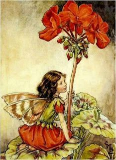 Illustration for the Geranium Fairy for 'Flower Fairies of the Garden'. A girl fairy kneels facing right on a geranium leaf, holding on to the flower stem with her left hand. By illustrator, Cicely Mary Barker Cicely Mary Barker, Flower Fairies, Fairies Garden, Fairy Dust, Fairy Tales, Illustrator, Geranium Flower, Fairy Pictures, Vintage Fairies