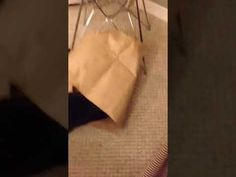 Author Gail Carriger's cat, Lilliput the Bean, diving into and bag and then and flopping over. Lilli is a small tuxedo cat and inspiration for Gail's charact. The Paper Bag, Black Cats, Happy, Bags, Handbags, Taschen, Purse, Purses, Totes