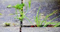 Weed Killers: 8 Natural Methods | Homesessive.com
