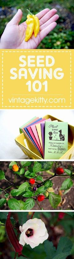 Gardening Tips - If you've ever wanted to save your own seeds, these Seed Saving 101 tips and cute envelopes will get you started on next year's garden! Hydroponic Growing, Hydroponic Gardening, Hydroponics, Indoor Gardening, Vegetable Gardening, Gardening Zones, Gardening Hacks, Urban Gardening, Indoor Herbs