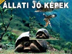 Állati Jó Képek5 - Super slides de animais em PPS - Wonderful - Clique e veja aqui