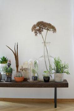 Urban Jungle Bloggers: the #plantshelfie by @look33