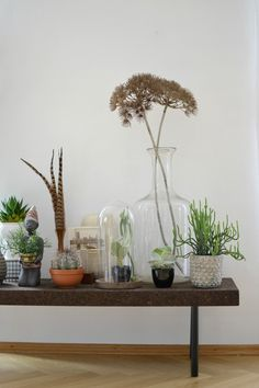 Urban Jungle Bloggers: the #plantshelfie by @look33