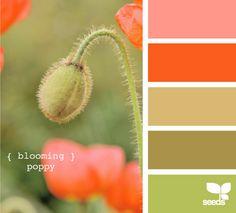 orange, green, pink