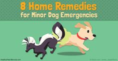 It's good to have these 3 items at all times to treat dog health issues: canned 100 percent pumpkin, povidone iodine, and 3 percent hydrogen peroxide. http://healthypets.mercola.com/sites/healthypets/archive/2016/10/26/minor-dog-emergencies-home-remedies.aspx