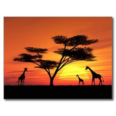 Shop African Sunset Canvas Print created by Personalize it with photos & text or purchase as is! Africa Painting, Africa Art, Africa Drawing, African Sunset, Sunset Canvas, African Animals, Landscape Paintings, Sunset Paintings, Painting Inspiration
