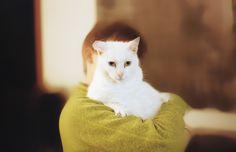 Série rencontres : Fusion amours  #cat #love #animal #meet Meet, Cats, Animals, Gatos, Animales, Animaux, Animal, Cat, Animais