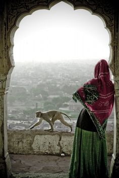 INDIA: Monkey and Woman enjoying view in Jaipur, Rajastan, In This World, We Are The World, People Of The World, Wonders Of The World, Goa India, Delhi India, Cultures Du Monde, India Images, Amazing India