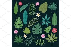 Different tropical leaves summer green exotic jungle palm leaf nature plant botanical hawaii flora vector - Objects - 1