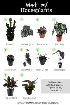 Black Leaf Houseplants - Black plants can be slightly harder to find than your typical green houseplants - but no worries! I've put this list together for you of my favorite black plants. House Plants Decor, Plant Decor, Garden Plants, Indoor Plants, Indoor Ferns, Landscaping Plants, Indoor Gardening, Gothic Garden, Victorian Gothic Decor