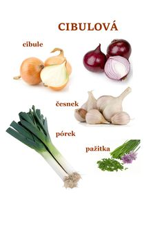 Elementary Science, Montessori, Onion, How To Plan, Vegetables, School, Food, Catalog, Meal