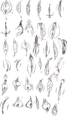 How to draw vaginas