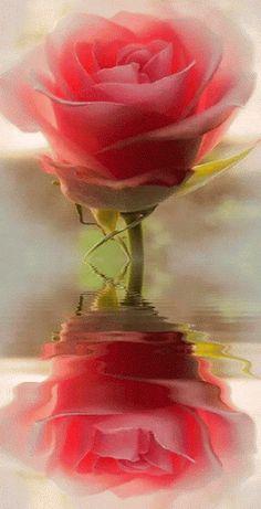 flores para presentaciones Kids Crafts diy crafts for kids outdoors Flowers Gif, Beautiful Rose Flowers, Beautiful Gif, My Flower, Flower Art, Flower Power, Beautiful Flowers, Art Floral, Gif Bonito