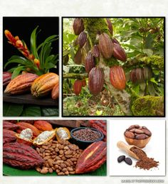 "Superfoods are foods with a rich nutritional profile and/or extraordinary medicinal benefits. Cacao is called ""The Food of the Gods"" and contains over 300 chemical compounds, making it one of the most complex substances on the planet."