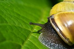 ... about slow movers on Pinterest Snails, Macros and Garden snail