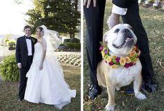 bodas y perros