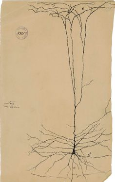 Neuronal Artwork by Santiago Ramón y Cajal. Would kill for an original piece.