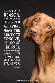 Dog Quote - Dogs, for a reason that can only be described as divine... Dog, Dog Quotes Inspirational Quotes, Funny Quotes, Life Quotes