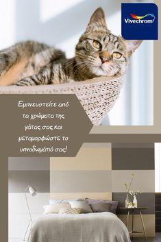 Εμπνευστείτε από τα χρώματα της γάτας σας και μεταμορφώστε το υπνοδωμάτιό σας, πάντα με τη βοήθεια της Vivechrom! Fashion Colours, Living Room, My Style, Cats, Colors, Animals, Home Decor, Gatos, Animales