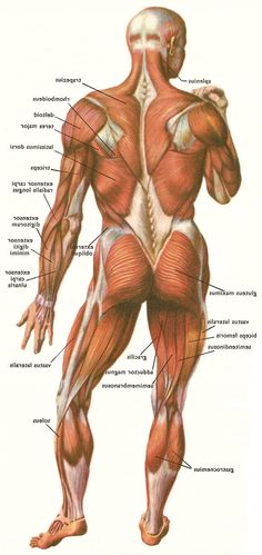 Human anatomy careers