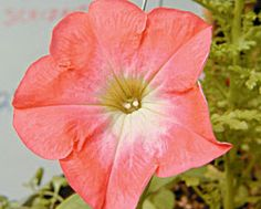 Plants for the Midwest - Capper's Farmer Magazine