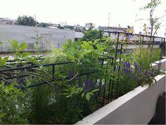 L'occultation légère au balcon par le végétal