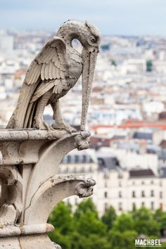 Pelícano Quimeras o Gárgolas de Notre Dame París Francia by machbel