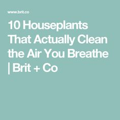 10 Houseplants That Actually Clean the Air You Breathe | Brit + Co
