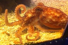 11 Blue Reef Aquarium, Animals, Animales, Animaux, Animal, Animais