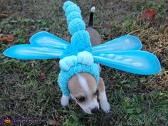 Blue Dasher 'Dog'onfly - 2012 Halloween Costume Contest